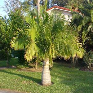 palm service